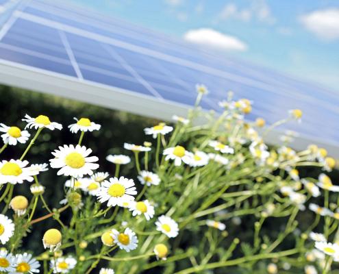 Umwelt, Natur, Photovoltaikanlage SÜDWERK
